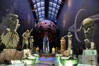Muzeum Histroii Naturalnej