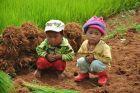 Na polu ryżowym