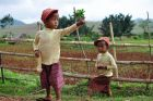 Birmańscy bliźniacy