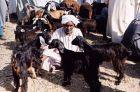 Daraw - targ zwierząt