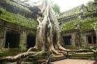 Korzenie w świątynia Tha Phrom