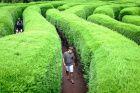 Wyspa Jeju - zielony labirynt