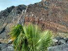 Palma na tle skał