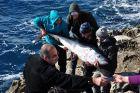 Okazuje się to być wielki tuńczyk