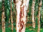 Las przy wodospadach Aleksandry