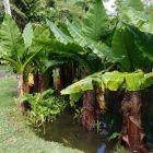Pamplemousses - rośliny ogrodu botanicznego