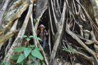2014, Sulawesi, Ania w wielkim drzewie
