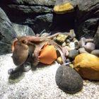 Porto - Oceanarium