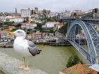 Mewa i Most Luisa