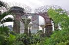 Drzewa i Hotel Marina Bay Sands