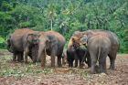 Pinawella - sierociniec słoni