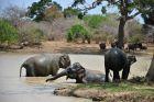 Słonie w zbiorniku