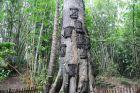 Sangalla - Drzewo z grobami niemowląt