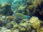 Świat podwodnych korali
