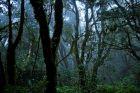 Las chmurowy w Anadze