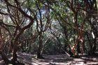 Las laurasilva w Cruz del Carmen